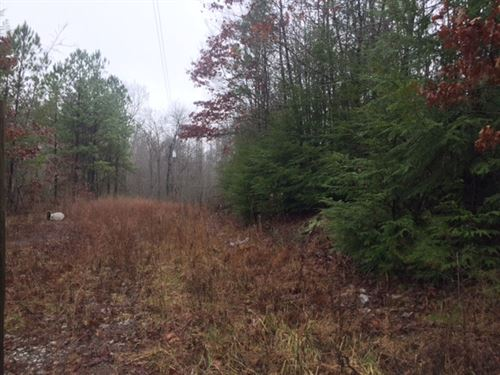 28.71+/- Acres Unrestricted Wooded : Tracy City : Grundy County : Tennessee