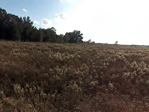 .49 Acres In Ocala, Fl : Sw 31st Pl : Marion County : Florida
