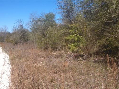 Excellent Homesite - High & Dry : Ft White : Columbia County : Florida