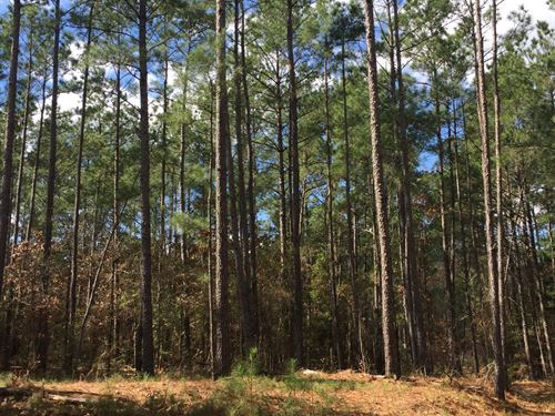 71 Ac Union Springs Rd. : Corrigan : Polk County : Texas