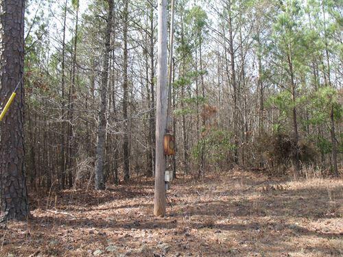 Highway 57 Deer Tract : Irwinton : Wilkinson County : Georgia