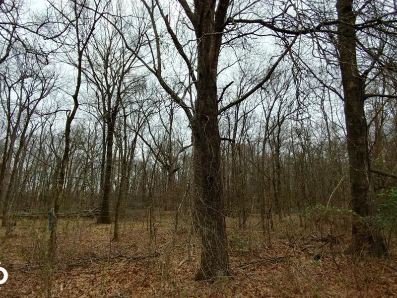 84 Acre Southeast Arkansas Deer : Eudora : Chicot County : Arkansas