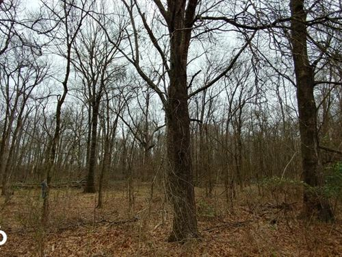84+/- Acre Southeast Arkansas Deer : Eudora : Chicot County : Arkansas