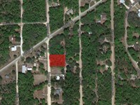 Land For Sale $99 Down, $100/Month : Interlachen : Putnam County : Florida