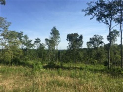51.67 Acres In Metcalfe County, Ky : Edmonton : Metcalfe County : Kentucky