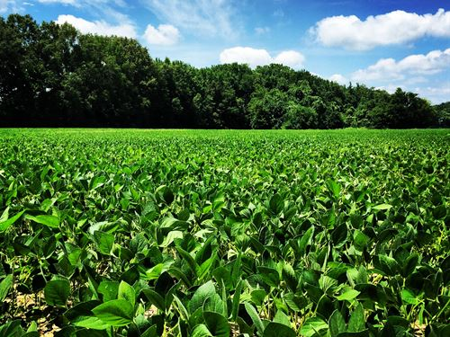 Great 255 Acre Farm For Sale : Lagrange : Lee County : Arkansas