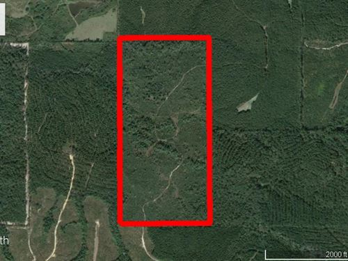 Hunting/Timber Investment : Waynesboro : Wayne County : Mississippi