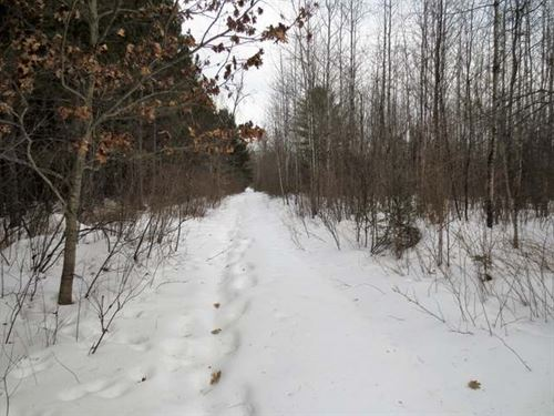 80 Wooded Acres : Nashville : Forest County : Wisconsin