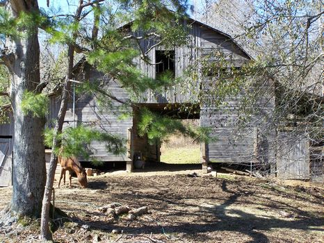 34 Acres, 2 homes, Creek, N. Forest : Ashland : Clay County : Alabama