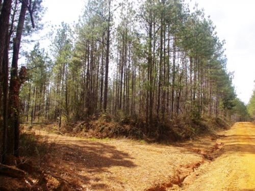 Land For Sale Amite County, Ms : Magnolia : Amite County : Mississippi
