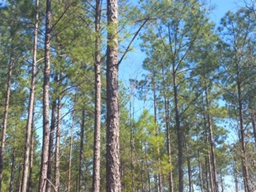 The Andrews Tract : Mount Beulah : Aiken County : South Carolina