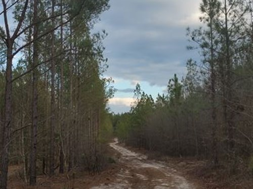 Old Shoals Tract : Monetta : Aiken County : South Carolina