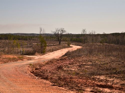 Prime Hunting Land : Lapine : Crenshaw County : Alabama