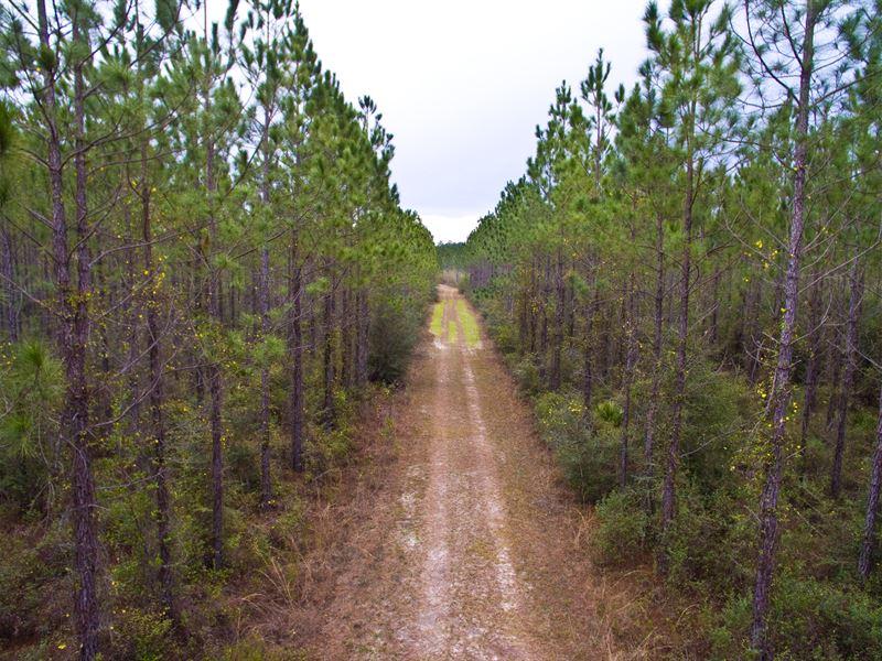 Reduced Hunting Near Panama City : Fountain : Bay County : Florida