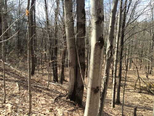 106 Acres Hunting Land Birdsall Ny : Birdsall : Allegany County : New York