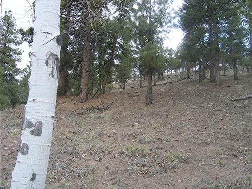 Peaceful Ponderosa : South Fork : Rio Grande County : Colorado