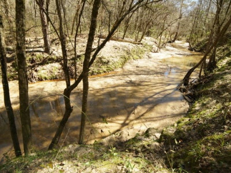Turn Key Hunting Tract Adams Co  Ms : Land for Sale