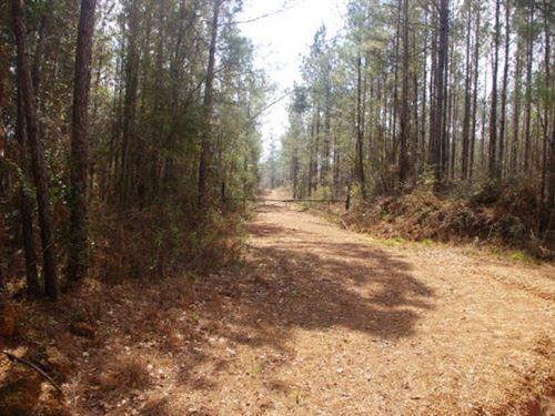 Amite Countyland For Sale Gillsburg : Magnolia : Amite County : Mississippi