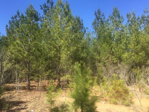 Hurych & Underwood - Off Welch Road : Robbins : Moore County : North Carolina