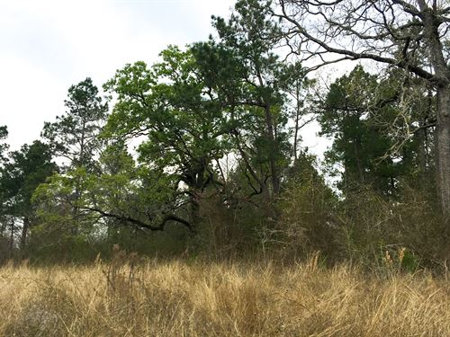 24 Ac Wilderness Road : Point Blank : San Jacinto County : Texas