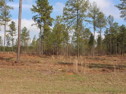 Country Lots : Vienna : Dooly County : Georgia