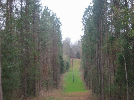 236 Acres Hunting Land and House : Lafayette : Chambers County : Alabama