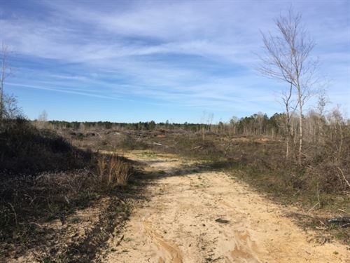 80+/- Acre Tract : Stanley Barnes Lane : Marion County : Mississippi