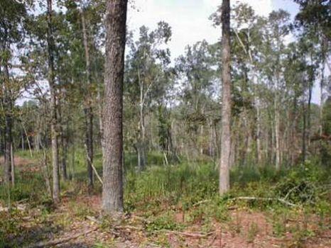 76 Acres Hunting/Timberland : Fredonia : Chambers County : Alabama