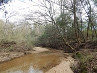 Cabin & 74 Acres : Magnolia : Pike County : Mississippi