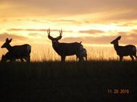Absolute Sd Ranch Auction : Faith : Perkins County : South Dakota