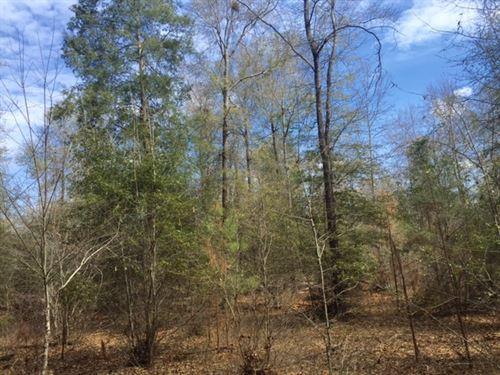 35-Ac Hunting W/ Ag Neighbors : Plains : Sumter County : Georgia