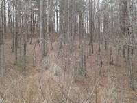 Lot 17 Timber Ridge Subdivision : Ferguson : Wilkes County : North Carolina