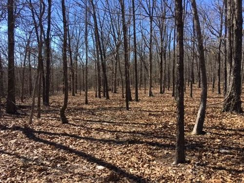Almost Completely Wooded Hide-A-Way : Elk Creek : Texas County : Missouri
