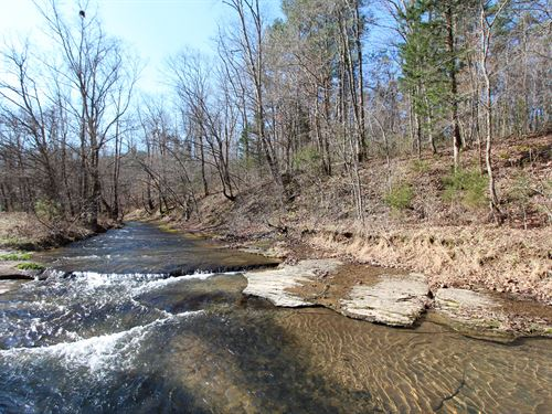 37 Ac Mix Of Hardwoods & Open Land : Hohenwald : Lewis County : Tennessee