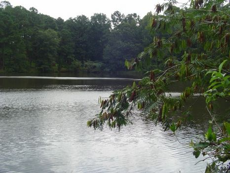 20 Acres With 7 Acre Pond : Gray : Jones County : Georgia