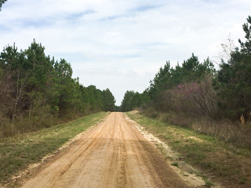 1837 Ac Wilderness Road : Point Blank : San Jacinto County : Texas