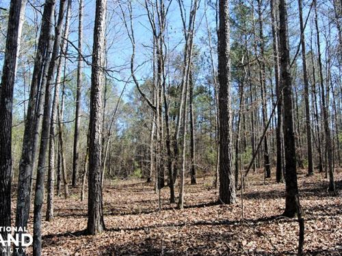 U.S. Hwy 43 South Investment Tract : Linden : Marengo County : Alabama