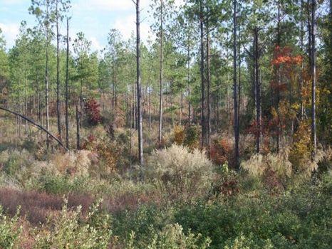 Amazing Deal  1747 Acres Marion Ga : Buena Vista : Marion County : Georgia