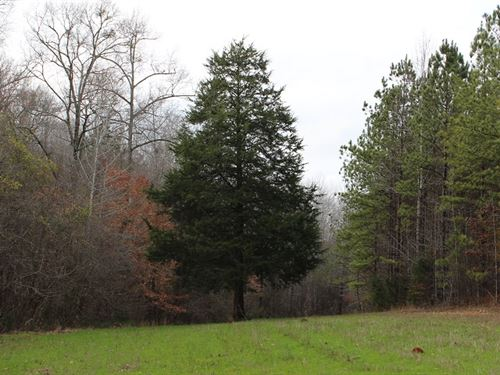 Lake Martin Area Land And Timber : Walnut Hill : Tallapoosa County : Alabama