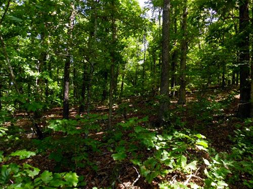 A-Wooded Half Acre With Electric : Valley View : Sharp County : Arkansas