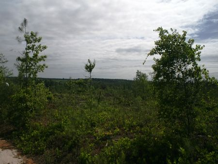 76.7 Acre Hunting/timber Tract : Ideal : Macon County : Georgia