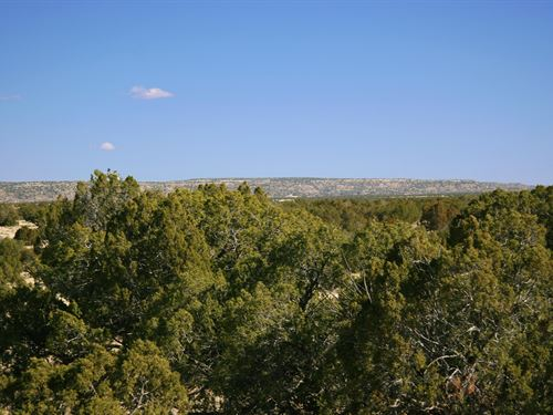 Remote Arizona Ranch $237 Month : Saint Johns : Apache County : Arizona