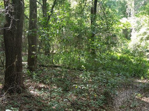 10 Acres Tract In Desirable Area : Dade City : Pasco County : Florida