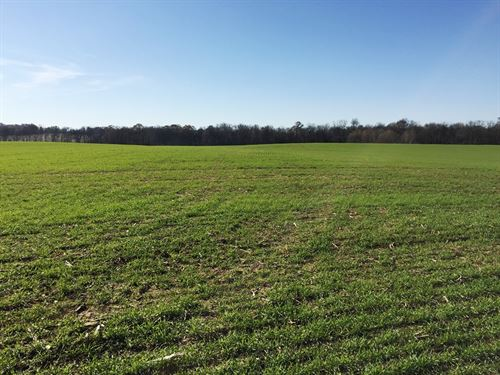 110.18 Acres Prime Development Land : Clarksville : Montgomery County : Tennessee