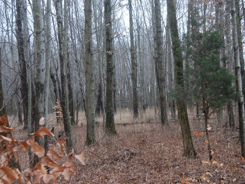 Number 5 Rd - 4.71 Acres : Pleasant Plain : Clermont County : Ohio