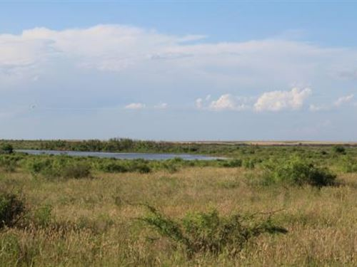 Cattle Ranch Auction - 610 Acres : Electra : Wichita County : Texas