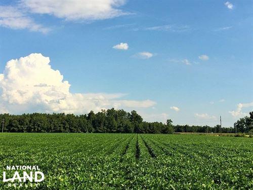 Mini Farm Homesite : Kingstree : Williamsburg County : South Carolina