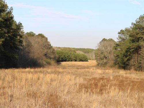 118 Acres In Marion/Jefferson Davis : Columbia : Jefferson Davis County : Mississippi