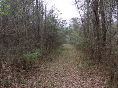 Hunting, Timberland For Sale In Jas : Heidelberg : Jasper County : Mississippi