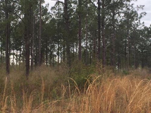 9 Acres Home Site In Purvis Ms : Purvis : Lamar County : Mississippi